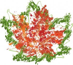 Large leaf image